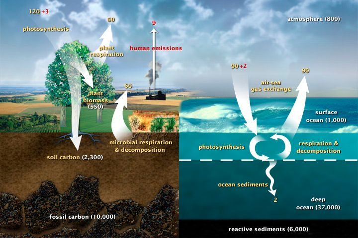 Carbon cycle!